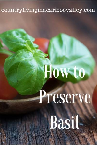 The easiest way to preserve Basil. Then use it just like fresh all winter long. #herbs #basil #preserving