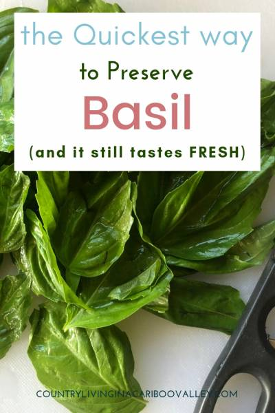 Here's a fast and easy way to store fresh Basil. Use Basil in Italian recipes, pestos and salads. This proven method gives you fresh tasting Basil all winter long. #basil #food #pesto #herbs #preserving #freezing
