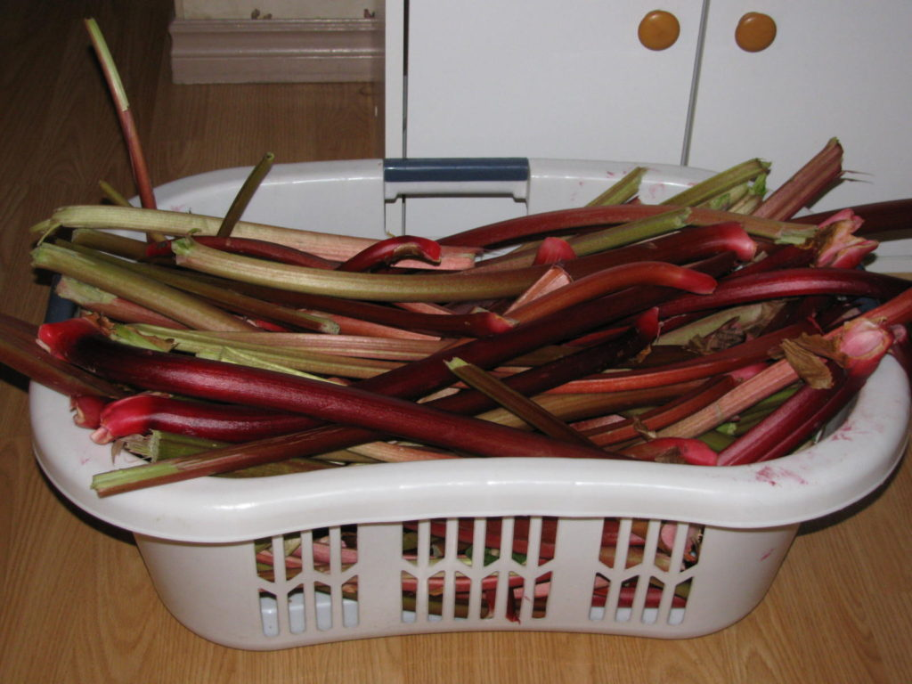 make rhubarb wine, make wine at home