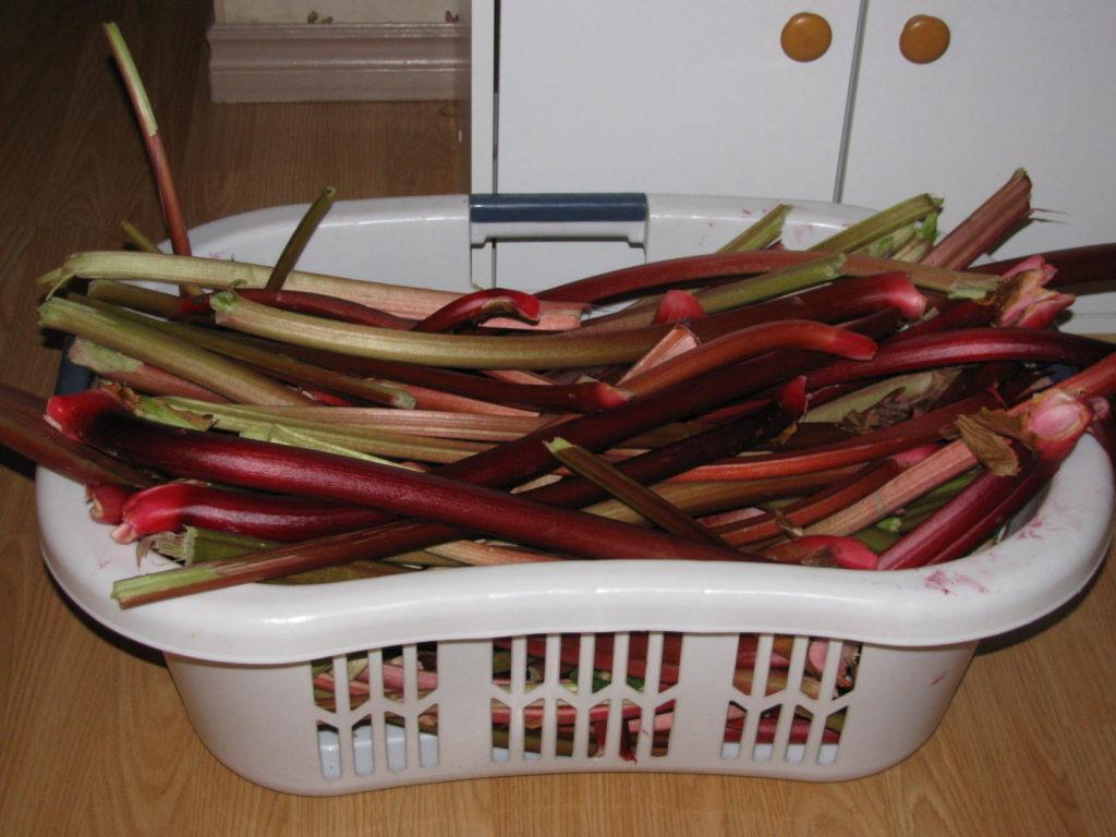 make rhubarb wine, make wine at home