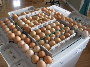 eggs 2 300x225 How To Get Started on the Path to Providing for Your Family