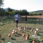eli being chased by chickens