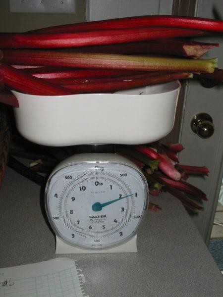 how to make rhubarb wine, make wine at home