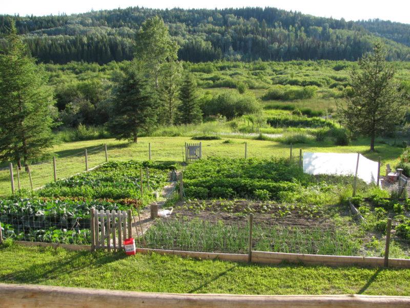 wonderful berry garden Part - 2: wonderful berry garden good looking