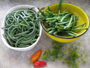 Garlic Scapes, Dill and Hot Peppers, making Pickled Garlic Scapes