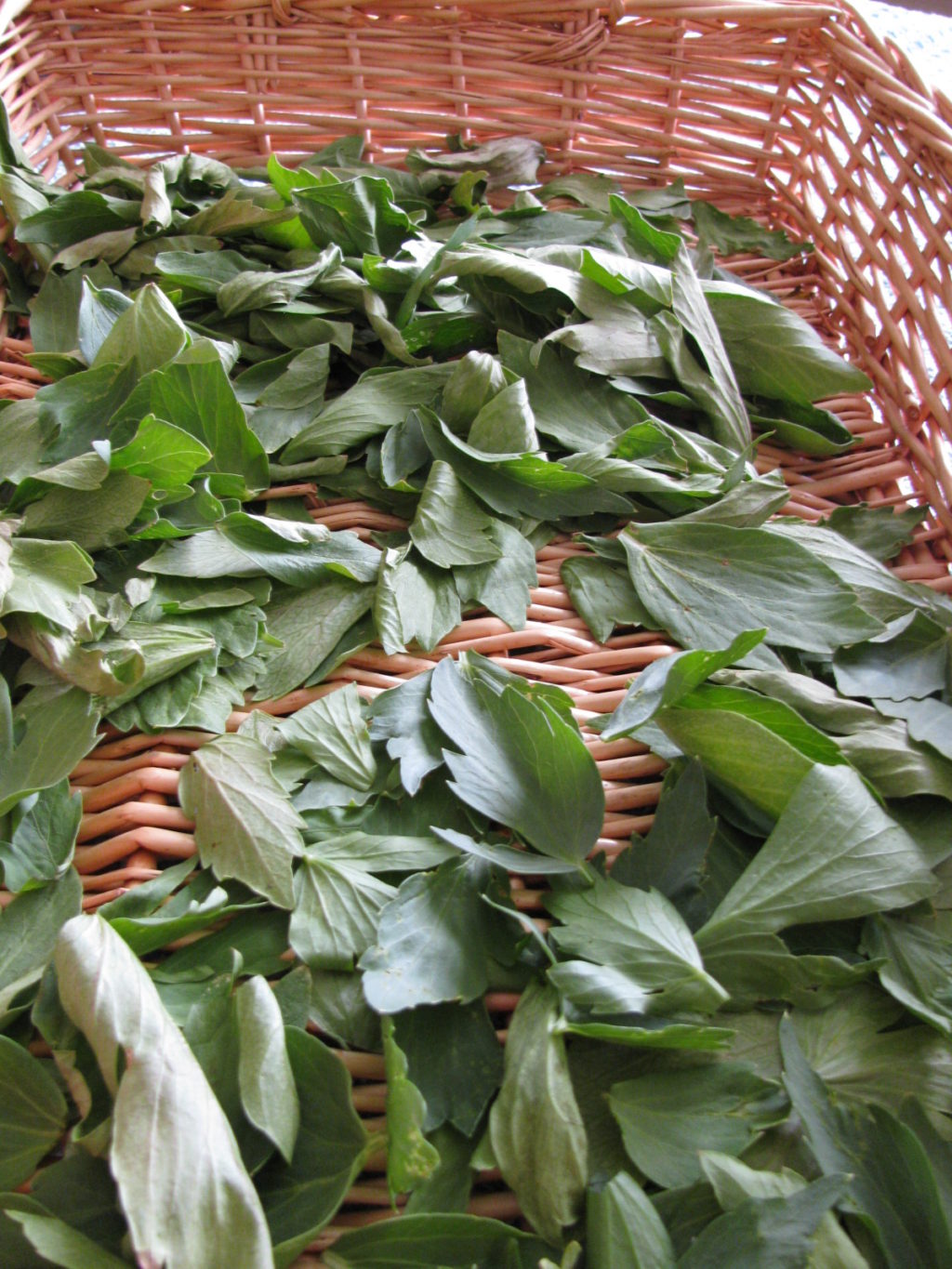 How to Dry Herbs Without a Dehydrator #herbs #cooking #dehydrating