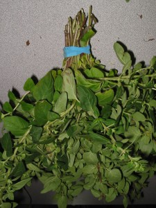 oregano 2 225x300 How to Dry Herbs