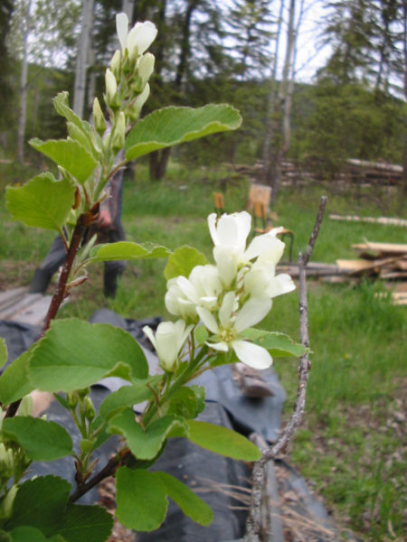 spring, country living in a cariboo valley