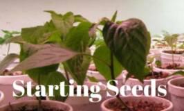 propogating, growing under lights