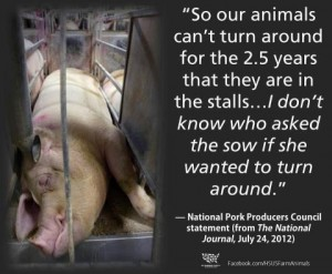 This is how your grocery store bought pork was raised.