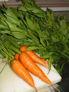 harvested carrots and lovage aug 13 08 225x300 Growing & Harvesting Carrots   Wordless Wednesday