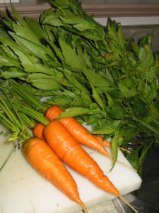 Harvested carrots and lovage