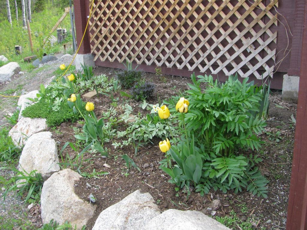 grow valerian, tulip, perennials