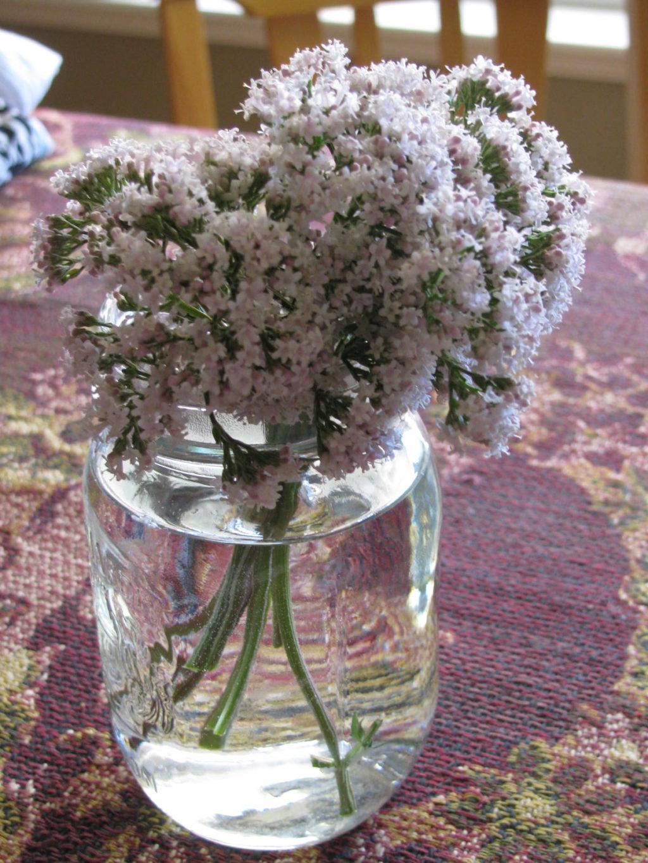 valerian, herbs