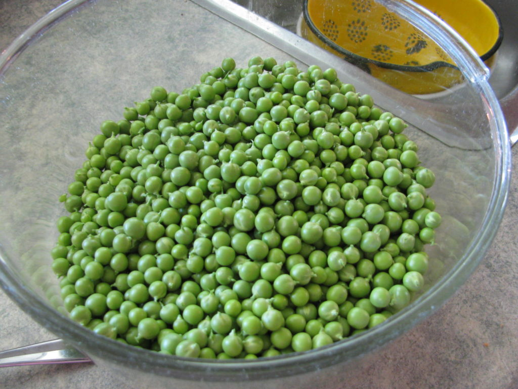 how to blanch and freeze peas, grow peas, blanch peas