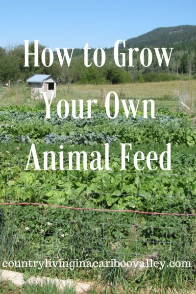 How to Grow Your Own Animal Feed