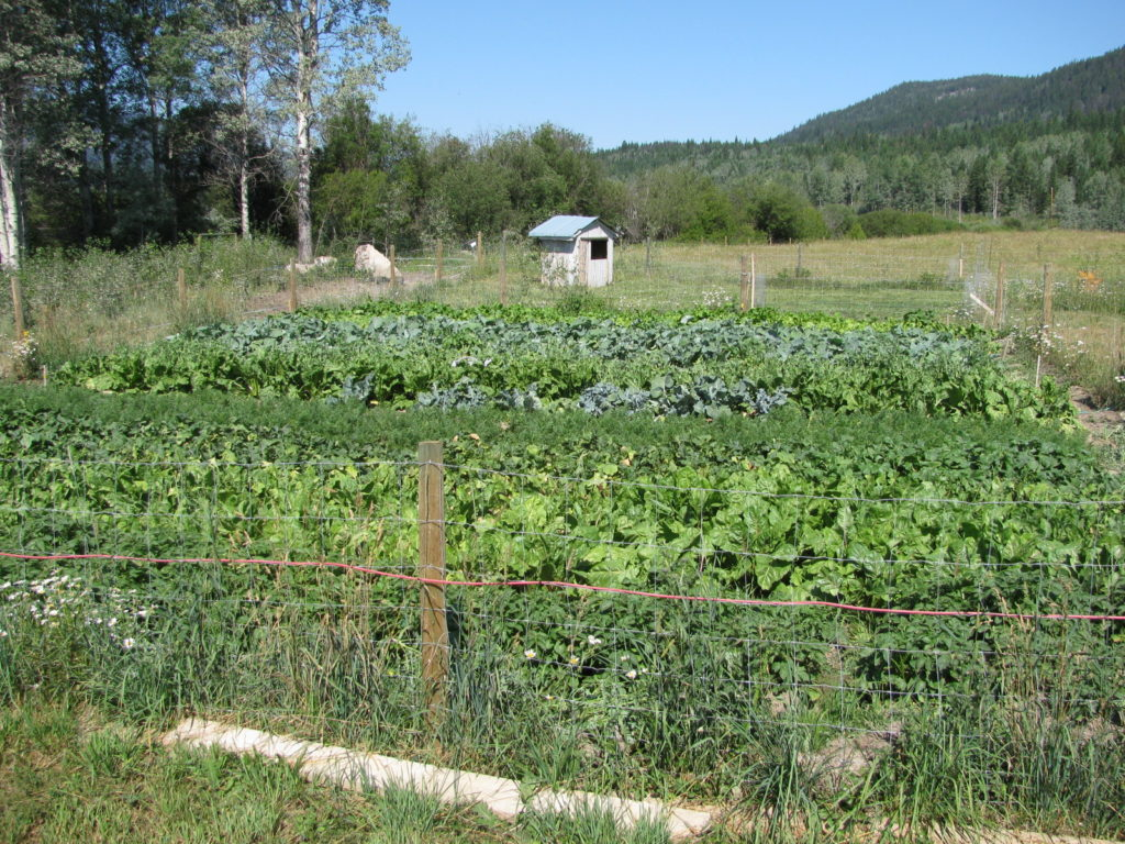 Grow your own animal feed and save money at the feed store. #gardening #chickens #homesteading
