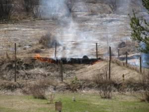 IMG 8437 300x225 Burning in Springtime