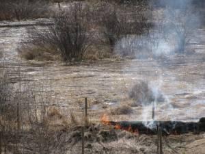 IMG 8439 300x225 Burning in Springtime