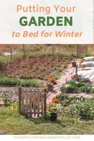 An autumn garden that needs harvesting.