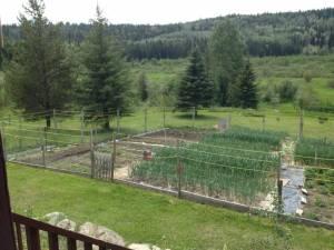 Our garden June 10
