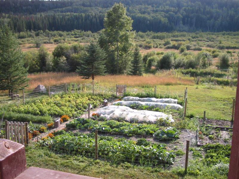 Planning Your Food Garden