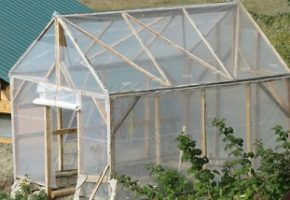 How to Build a Greenhouse For Under $200