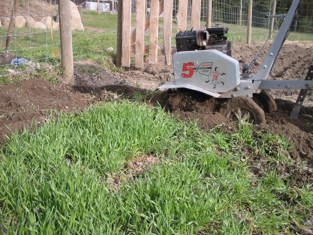 organic, heirloom, green manure, cover crop, buckwheat