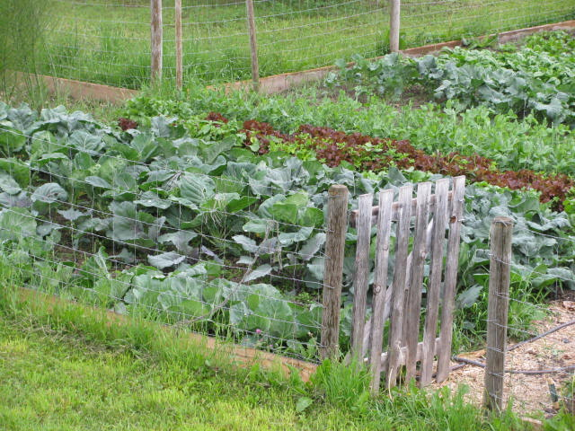 The 5 Easiest Vegetables to Grow