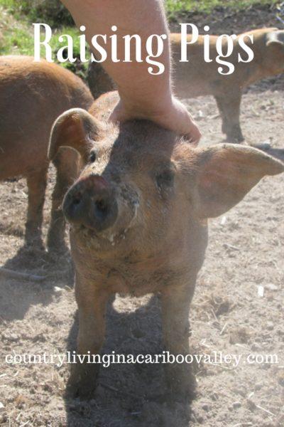 livestock, barn, farm, country living
