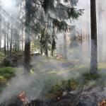 Campfire Safety