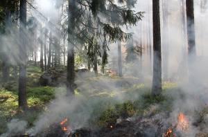 styggkarret-reserve-burning-fire-50700