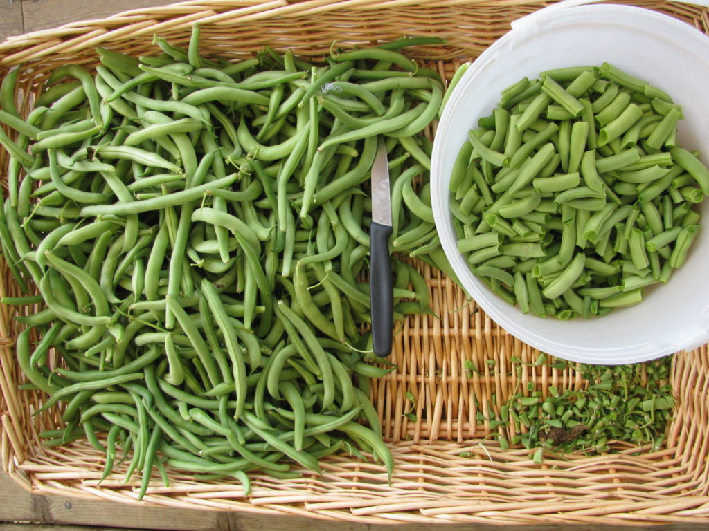 how to clean green beans for canning