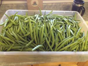 Pressure Canning Green Beans