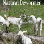 How To Make a Natural Herbal Dewormer