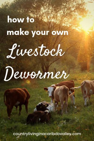 Make your own all natural herbal dewormer to use for chickens, pigs, sheep, cattle, goats, horses. Use a dewormer regularly to keep your animals healthy. #dewormer #chickens #pigs #sheep #animals #homesteading