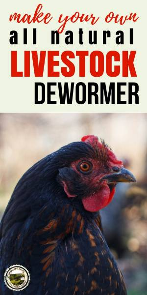 Animals need to be dewormed regularly. Here's an all natural herbal dewormer recipe you can make yourself. #herb #dewormer #livestock #chickens