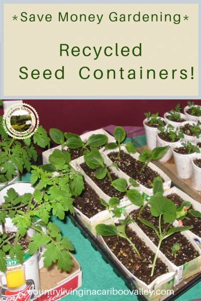 seedlings grow in recycled containers