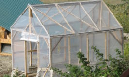 Add a Greenhouse to your homestead like we did - under $200 and one weekend! #gardening #greenhouse #north