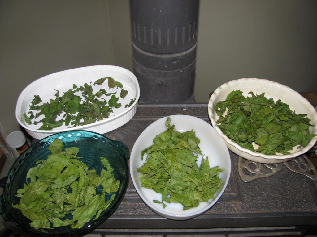 How to dry herbs for use all year round