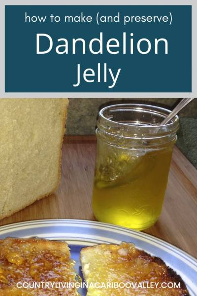 Make your own Dandelion Jelly. It's tasty, easy and fast to preserve. Here's how to water bath can Dandelion Jelly. #dandelion #canning #recipe