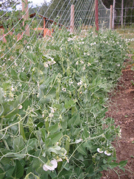 how to save seed, heirloom, grow your own food