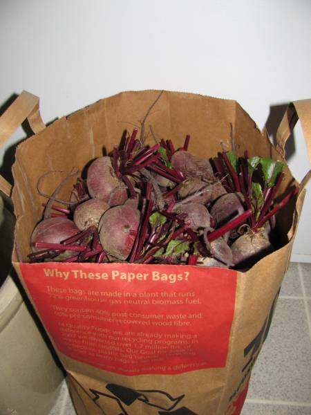 a bag of harvested beets wait to be made into pickles