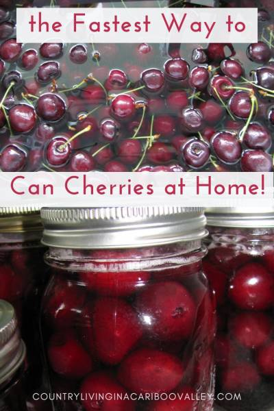 Home canning cherries can be done quickly! Here's step by step instructions on how to can cherries. What to do when canning cherries. Canning recipe can be found here. #canning #food #preserving #cherries #recipe