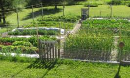growing a healthy garden after fixing the clay soil.