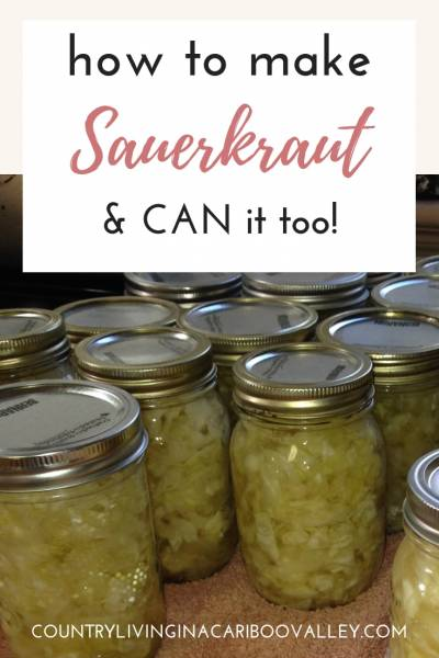 Ferment your own sauerkraut. So good for gut health, making sauerkraut is easy. Here's how. #sauerkraut #canning #preserving