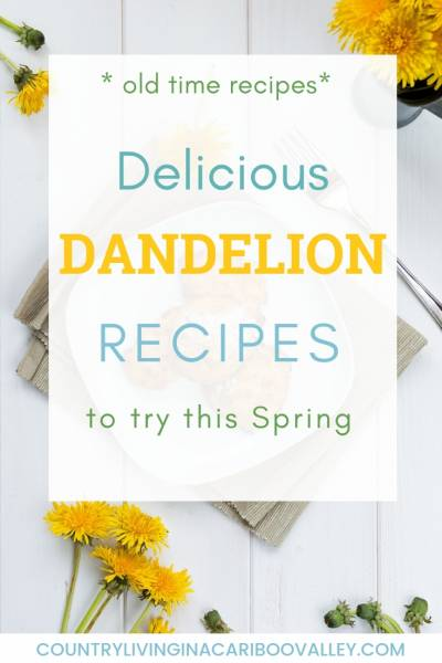 Old time delicious Dandelion recipes. Fritters, cookies, jelly, wine and more dandelion recipes. #dandelion #recipes #preserving