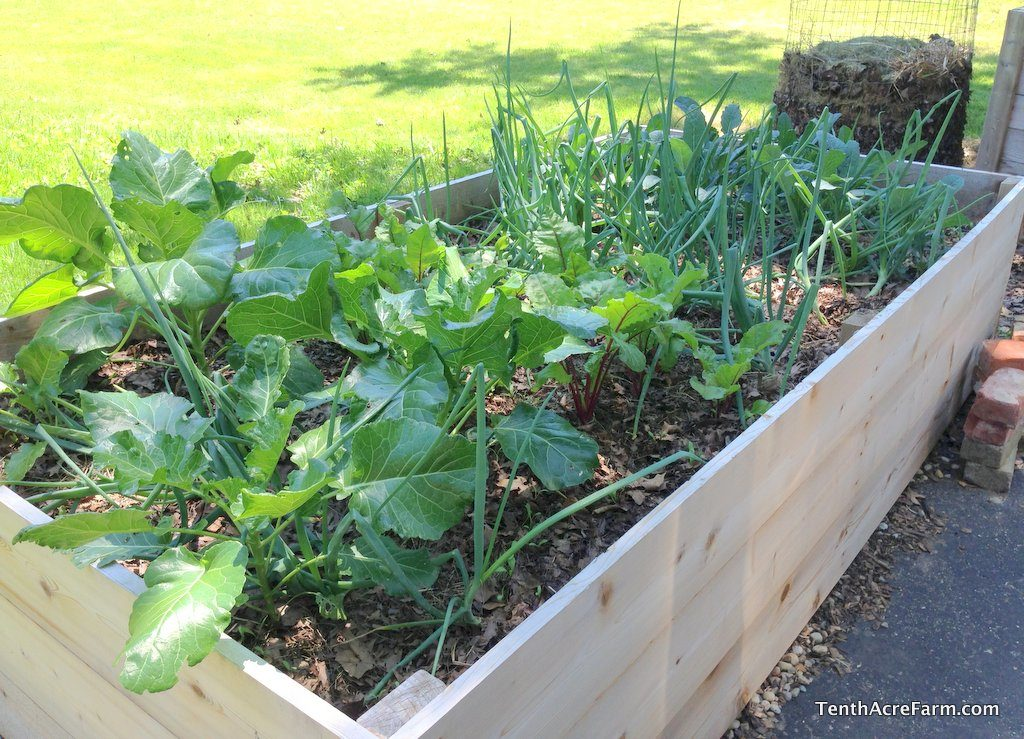 Grow food for your family in 15 minutes a day. Gardening for busy people!