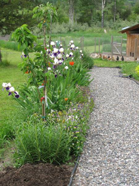 Blooming perennial flower bed