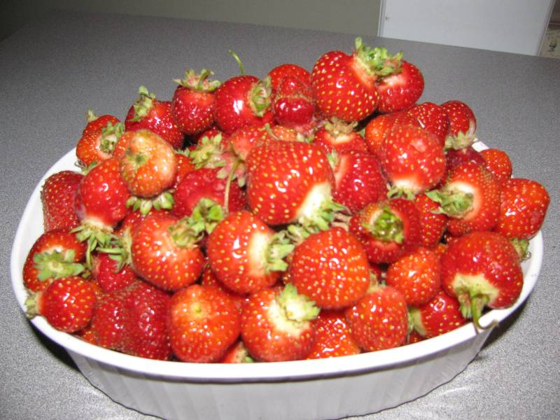 a bowl of freshly picked strawberries